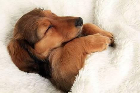 睡眠とウェアの関係性について