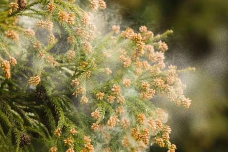 花粉症と運動